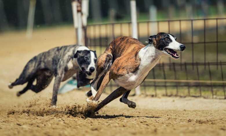Casinoslot Köpek Yarışları Tutturma Taktikleri