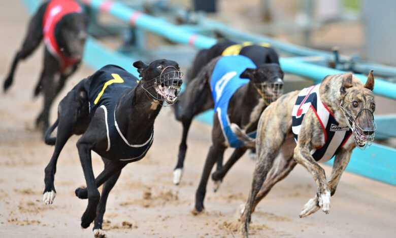 Casinoslot Köpek Yarışları Kazanma Taktikleri Nedir